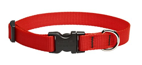 Best of – LupinePet Basics 3/4″ Red 13-22″ Adjustable Collar for Medium and Larger Dogs – FREE SHIPPING