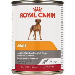 Royal Canin Canine Health Nutrition Adult In Gel Canned Dog Food (Case of 12/1), 13.5 oz