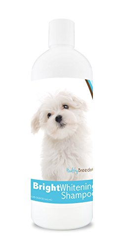 Healthy Breeds Dog Bright Whitening Shampoo for Maltese – For White, Lighter Fur – OVER 150 BREEDS – 12 oz – With Oatmeal For Dry, Itchy, Sensitive, Skin – Moisturizes, Nourishes Coat