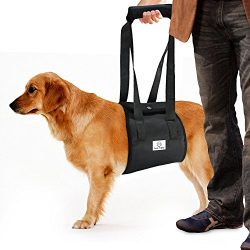Dog Lift Harness Sling | ACL Brace for Rear Leg Support of XL Old Dogs | Help Em Up Carrier Knee Limping Joint Hock Hip Injuries Arthritis Poor Mobility Veterinarian Approved Rehabilitation Recovery