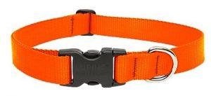 LupinePet Basics 1″ Blaze Orange 12-20″ Adjustable Collar for Medium and Larger Dogs