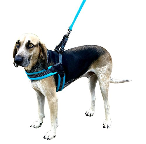 Sporn Easy Fit Dog Harness, Blue, Medium