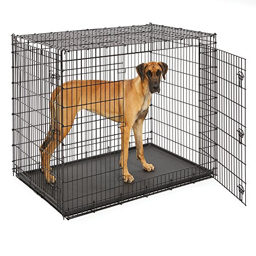 MidWest Homes for Pets XXL Giant Dog Crate | 54-Inch Long Ginormous Double Door Dog Crate