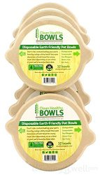 CleanHealthyBowls Cat & Small Dog Bowl