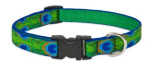 LupinePet Originals 3/4″ Tail Feathers 13-22″ Adjustable Collar for Medium and Larger Dogs