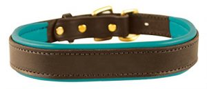 Perri's Padded Leather Dog Collar, Havana/Turquoise, Medium
