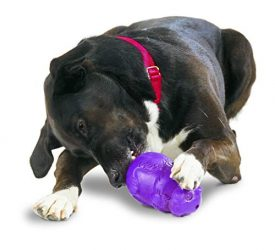PetSafe Busy Buddy Squirrel Dude, Durable Rubber Dog Chew Toy, Use with Food or Treats