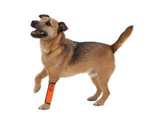 PET LIFE 'Extreme-Neoprene' Joint and Hip Protective Recovery Supportive Reflective Pet Dog Sleeves, Large, Orange
