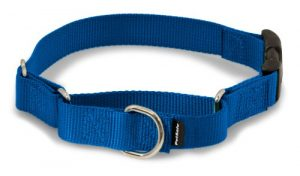 PetSafe Martingale Collar with Quick Snap Buckle, 1″ Medium, Royal Blue