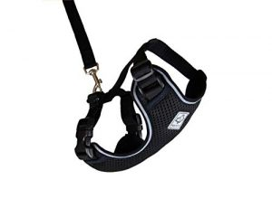 RC Pet Products 53805001 Primary Collection Adventure Kitty Harness, Large