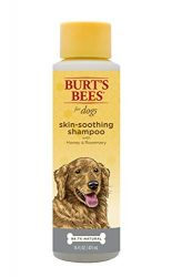 Burt's Bees for Dogs Natural Skin Soothing Shampoo with Honey | Puppy and Dog Shampoo, 16 Ounces